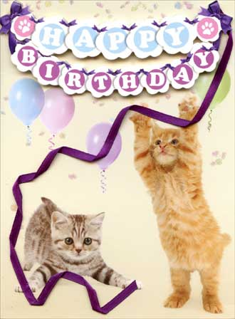 Kittens (1 card/1 envelope) Paper House Productions Die Cut 3D Birthday Card - FRONT: Happy Birthday  INSIDE: Hope it's purrfect!