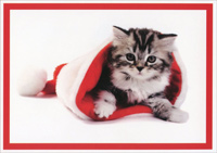 Kitten in Santa Hat (1 card/1 envelope) - Christmas Card  INSIDE: Tis the season to be jolly!  Merry Christmas