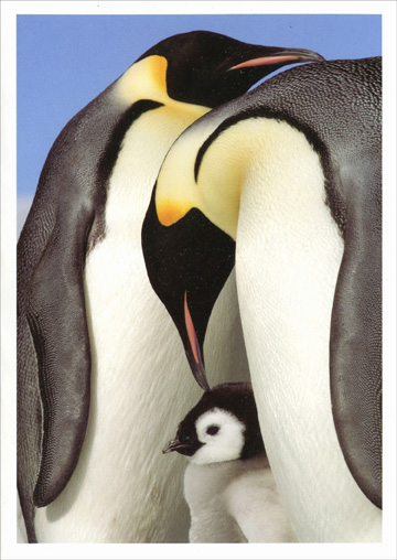Emperor Penguins (18 cards/18 envelopes) - Boxed Holiday Cards  INSIDE: May all the joys of the season surround you with love.