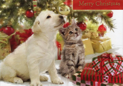 Puppy & Kitten Looking Up (16 cards & 16 envelopes) - Boxed Christmas Cards - FRONT: Merry Christmas  INSIDE: Enjoy the anticipation of Christmas day!