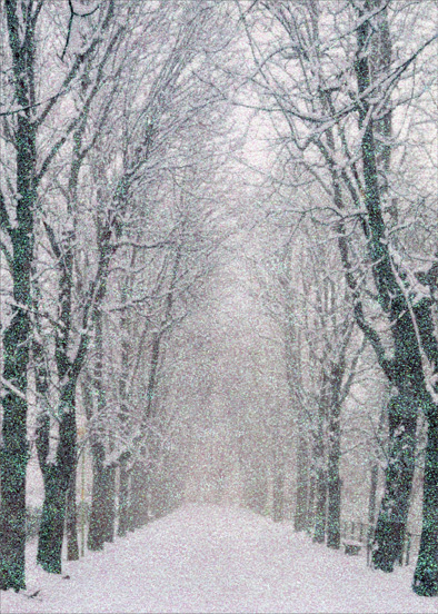 Tree Lined Path (14 cards/14 envelopes) - Boxed Christmas Cards  INSIDE: May your holidays be as peaceful and bright as newly fallen snow.  Season's Greetings