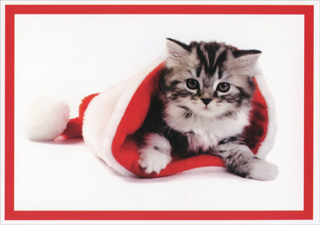 Kitten in Santa Hat (16 cards/16 envelopes) Paper Magic Cat Boxed Christmas Cards  INSIDE: Tis the season to be jolly!  Merry Christmas