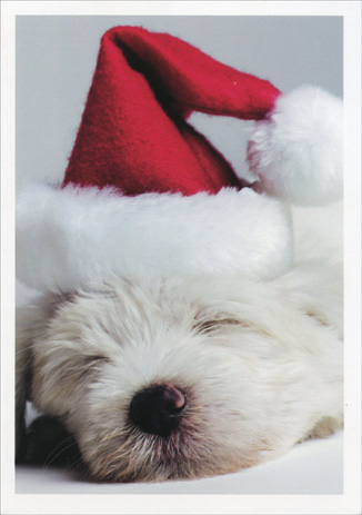 Puppy in Santa Hat (1 card/1 envelope) Paper Magic Dog Christmas Card  INSIDE: May all your Christmas dreams come true.  Merry Christmas