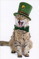 Pictura - St Patrick's Day Cards