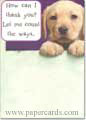 Lab Pup Thank You (1 card/1 envelope) - Thank You Card