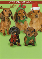 Dach the Halls (1 card/1 envelope) - Christmas Card - FRONT: It's Christmas  INSIDE: Time to DACH the Halls!