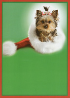Dog in Santa Hat (1 card/1 envelope) - Christmas Card  INSIDE: Warm wishes for a merry little Christmas!