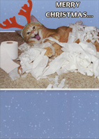 Shredder (1 card/1 envelope) - Christmas Card - FRONT: Merry Christmas�  INSIDE: �from the 9th reindeer, SHREDDER.