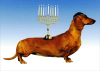 Kosher Weenie (1 card/1 envelope) - Hanukkah Card  INSIDE: Thought you'd like a nice kosher weenie for Hanukkah. Enjoy.