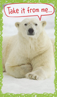 Take From Me Polar Bear: Money / Gift Card Holder (1 card/1 envelope) Recycled Paper Greetings Funny Christmas Card