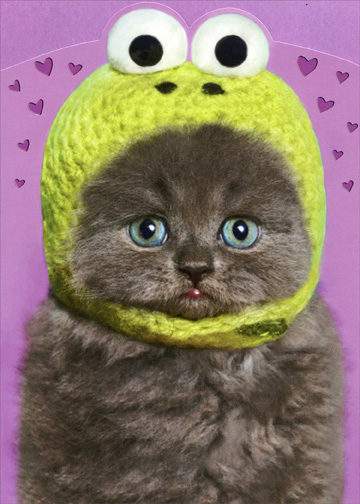 Kitten Wearing Knit Frog Hat Funny Cat Valentines Day Card