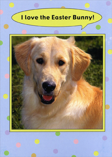 Dog/Bunny Taste Like (1 card/1 envelope) Funny Golden Labrador Retriever Easter Card - FRONT: I love the Easter Bunny!  INSIDE: He tastes kinda like chicken.  Happy Easter.