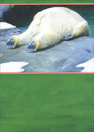 Polar Bear Hangover (1 card/1 envelope) Funny Christmas Card - FRONT: No Text  INSIDE: Have fun on Christmas, just go easy on the eggnog.