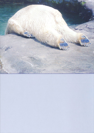 Polar Bear (1 card/1 envelope) Recycled Paper Greetings Funny Birthday Card - FRONT: No Text  INSIDE: Have fun on your birthday, just go easy on the tequila.
