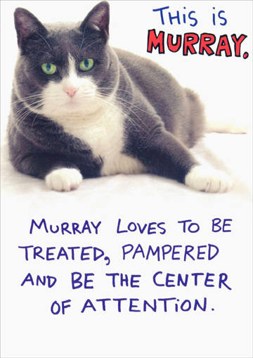 Murray (1 card/1 envelope) Recycled Paper Greetings Funny Cat Birthday Card - FRONT: This is Murray.  Murray loves to be treated, pampered and being the center of attention.  INSIDE: So on your birthday, EAT, DRINK and BE MURRAY.