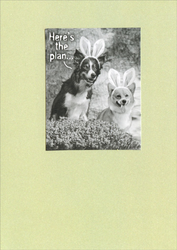Here's the Plan (1 card/1 envelope) Recycled Paper Greetings Funny Dog Easter Card - FRONT: Here's the plan�  INSIDE: �You can have the basket of goodies, but the bunny's all mine!� Happy Easter