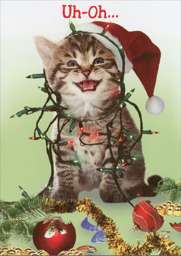 Merry Catsmess (1 card/1 envelope) Recycled Paper Greetings Funny Christmas Card - FRONT: Uh-Oh�  INSIDE: Merry Catsmess!
