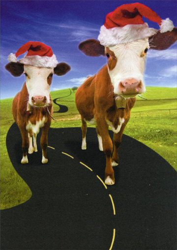 Here Comes Santa Cows (1 card/1 envelope) Recycled Paper Greetings Funny Christmas Card  INSIDE: Here comes Santa Cows, Here comes Santa Cows, Right down Santa Cows Lane� Happy Holidays