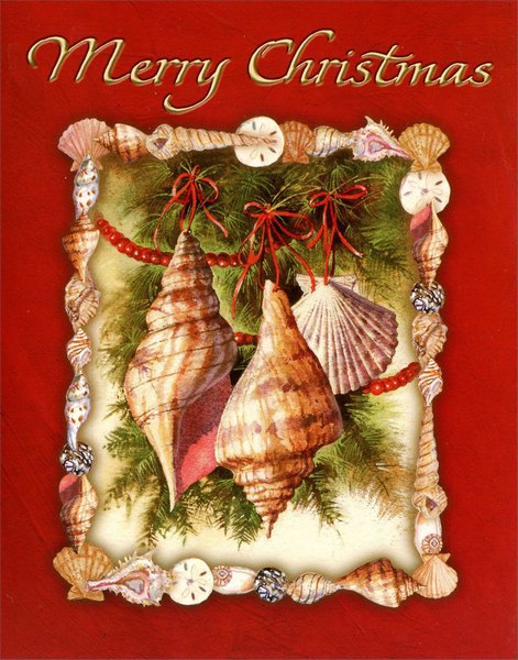 Christmas Shells (20 cards/21 envelopes) - Boxed Christmas Cards - FRONT: Merry Christmas  INSIDE: Wishing you the brightest and best of the Holiday Season, and every good wish for the New Year.