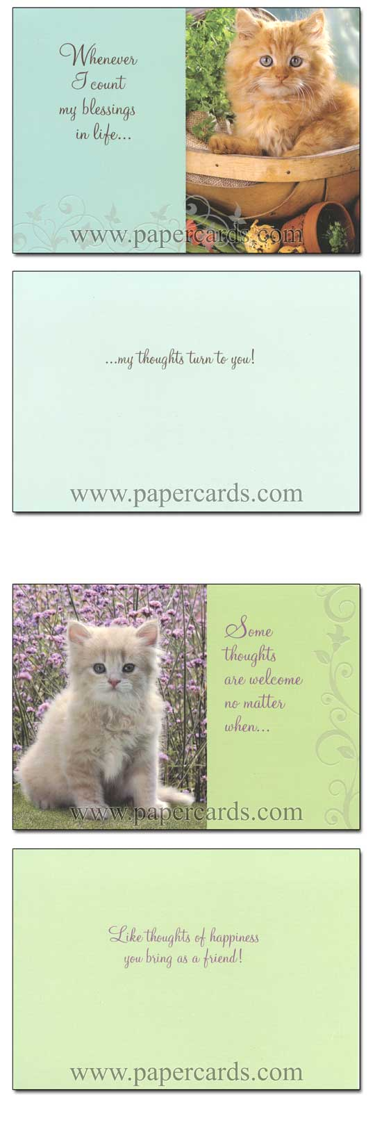 Curious Kittens (12 Thinking of You Cards with envelopes) - Boxed Thinking of You Cards - FRONT: Various  INSIDE: Various