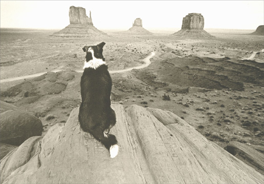 Dog Looking Over Canyon (1 card/1 envelope) - Birthday Card - FRONT: No Text  INSIDE: A new year stretches before you.. may it be all you could hope for and more. Happy Birthday