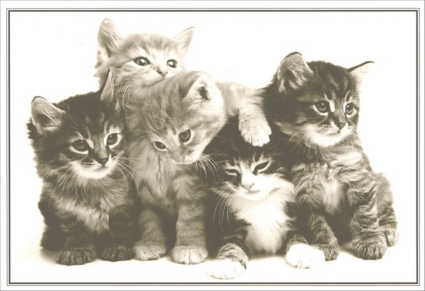 Group of Kittens (1 card/1 envelope) Sunrise Greetings Birthday Card  INSIDE: Happy Birthday  from the whole kitten kaboodle!
