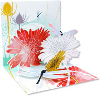 Dragonfly Morning (1 card/1 envelope) - Greeting Card  INSIDE: Choose your own message